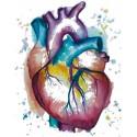 Aparato Circulatorio, Colesterol